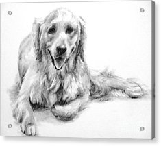 Acrylic Print featuring the drawing Miss Maddie  by Meagan  Visser