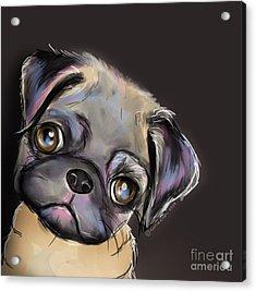 Miss Pug Acrylic Print