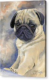 Miss Puggles Acrylic Print by Suzanne Schaefer
