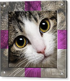 Miss Tilly The Gift 1 Acrylic Print