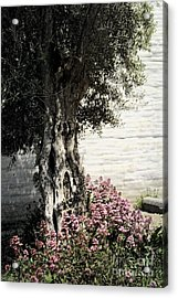Acrylic Print featuring the photograph Mission San Jose Tree Dedicated To The Ohlones by Ellen Cotton