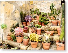 Mission Succulents Acrylic Print