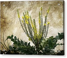 Acrylic Print featuring the photograph Mission Wallflower by Ellen Cotton