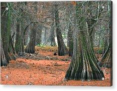 Mississippi Cypress Acrylic Print