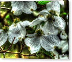 Mississippi Dogwood Acrylic Print by Lanita Williams