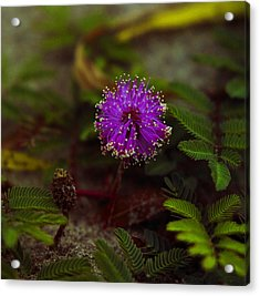 Acrylic Print featuring the photograph Mississippi Flower by Silke Brubaker