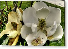 Acrylic Print featuring the photograph Mississippi Magnolia by Maddalena McDonald