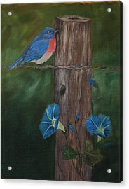 Missouri Blue Bird II Acrylic Print