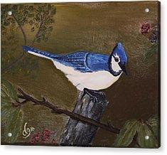 Missouri Blue Jay Acrylic Print