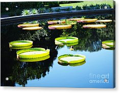 Missouri Botanical Garden Giant Lily Pads Acrylic Print by Luther Fine Art