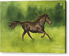 Missouri Fox Trotter Horse Acrylic Print