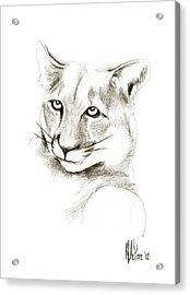 Missouri Mountain Lion II Acrylic Print by Kip DeVore