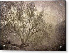 Mist Tree Acrylic Print by Guido Montanes Castillo