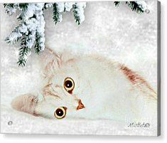 Mistletoe In The Snow Acrylic Print by Morag Bates