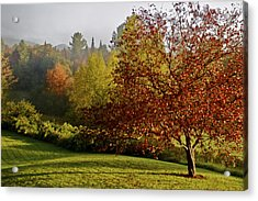 Acrylic Print featuring the photograph Misty Autumn Morning by Alice Mainville
