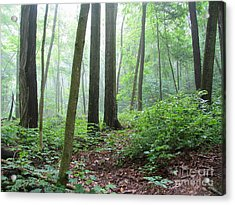Misty Deep Forest Acrylic Print
