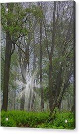 Misty Meadow Acrylic Print by Emily Stauring