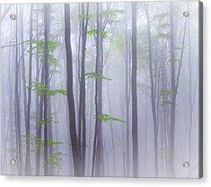 Misty Acrylic Print by Michel Manzoni