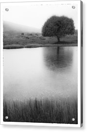 Misty Morning By The Pond Acrylic Print by Cristel Mol-Dellepoort
