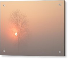 Acrylic Print featuring the photograph Misty Morning by Carlee Ojeda