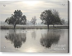 Misty Morning In Bushy Park London 2 Acrylic Print