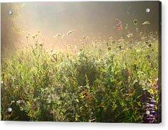 Misty Morning Acrylic Print by John Robichaud