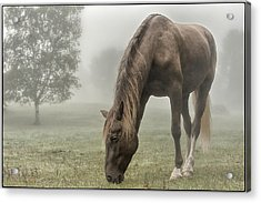 Misty Morning Acrylic Print by Peter Lindsay