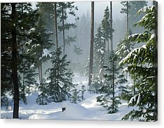 Misty Morning Snow Acrylic Print by Annie Pflueger