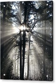 Misty Morning Sunrise Acrylic Print by Crista Forest