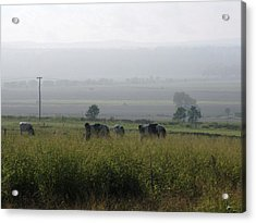 Acrylic Print featuring the photograph Misty Morning by Therese Alcorn