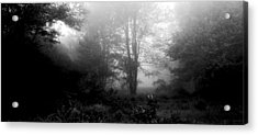 Misty Morning With Tree Silhouettes Acrylic Print by A Gurmankin