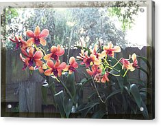 Misty Orchids Acrylic Print by Ginny Schmidt
