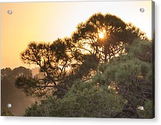 Misty Sunrise Acrylic Print