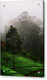 Misty Tea Plantations In Nuwara Eliya  Acrylic Print by Jenny Rainbow