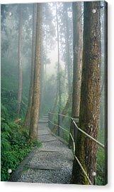 Misty Trail Acrylic Print