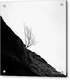 Misty Tree Glen Etive Acrylic Print by John Farnan