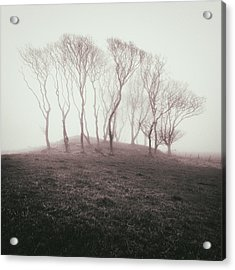 Misty Trees Acrylic Print by Dave Bowman