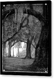 Misty Walk Through The Oak Trees Acrylic Print