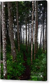 Misty Woods At Mt. Mitchell Acrylic Print