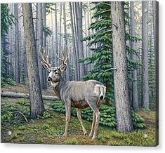 Misty Woods-buck Acrylic Print by Paul Krapf