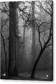 Misty Woods Acrylic Print by Rebecca Davis