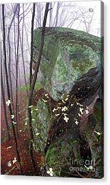 Misty Woods Acrylic Print by Thomas R Fletcher