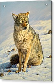 Misunderstood Acrylic Print by Paul Krapf