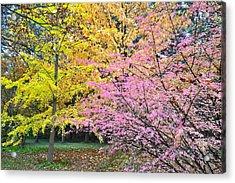 Mixed Fall Color Acrylic Print