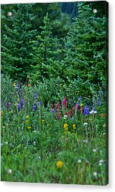 Acrylic Print featuring the photograph Mixed Flowers by Jeremy Rhoades