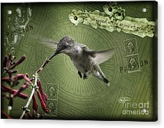 Mixed Media Hummingbird Art Collection Image One Acrylic Print by Cris Hayes