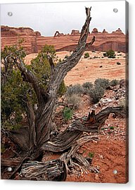 Moab Driftwood Acrylic Print by Kimberlee Fiedler