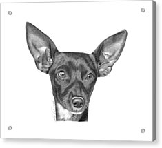 Acrylic Print featuring the drawing Mocha -036 by Abbey Noelle