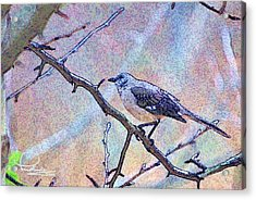 Acrylic Print featuring the photograph Mocking Bird by Ludwig Keck
