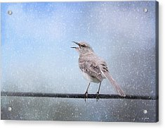 Mockingbird In The Snow Acrylic Print by Jai Johnson